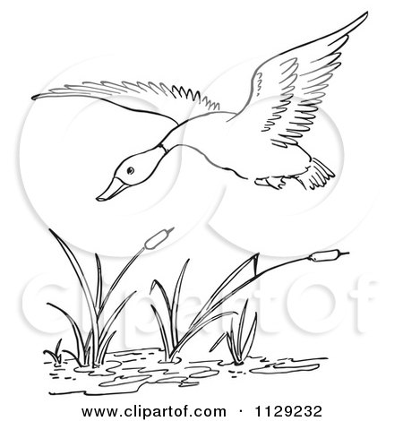 Cartoon Clipart Of An Outlined Duck Flying Over Cattails In A Pond - Black And White Vector Coloring Page by Picsburg