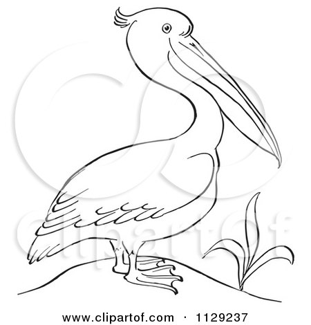 Cartoon Clipart Of An Outlined Pelican By A Plant - Black And White Vector Coloring Page by Picsburg