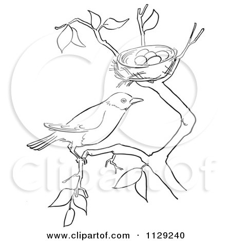 coloring pages robin tree - photo#5