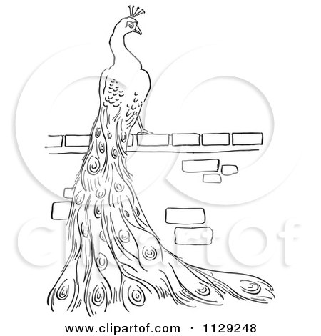 Cartoon Clipart Of An Outlined Peacock On A Brick Wall - Black And White Vector Coloring Page by Picsburg
