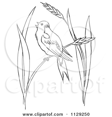 Cartoon Clipart Of An Outlined Cardinal Bird On A Blossom