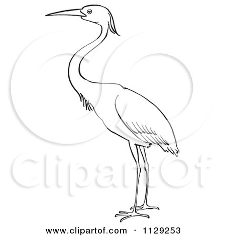 Cartoon Clipart Of An Outlined Heron Bird - Black And White Vector Coloring Page by Picsburg
