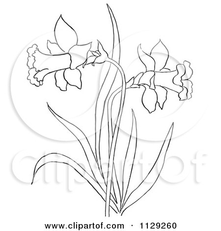 Cartoon Clipart Of An Outlined Dandelion Flower Plant