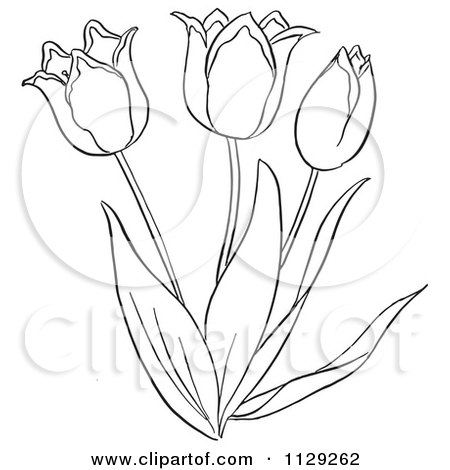 Cartoon Clipart Of An Outlined Tulip Flower Plant - Black And White Vector Coloring Page by Picsburg