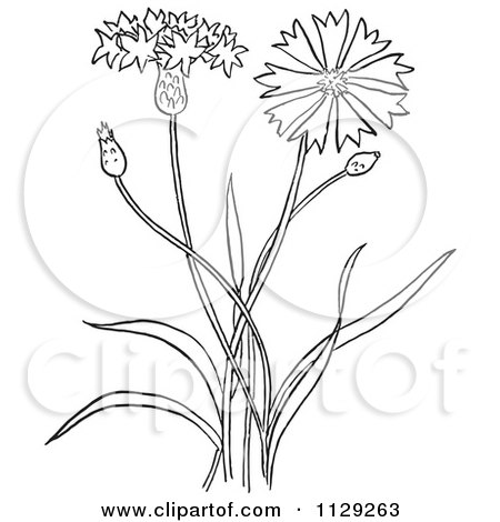 Cartoon Plants And Flowers Flower Plant Black And