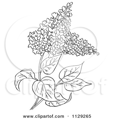 Cartoon Clipart Of An Outlined Lilac Flower Plant Black