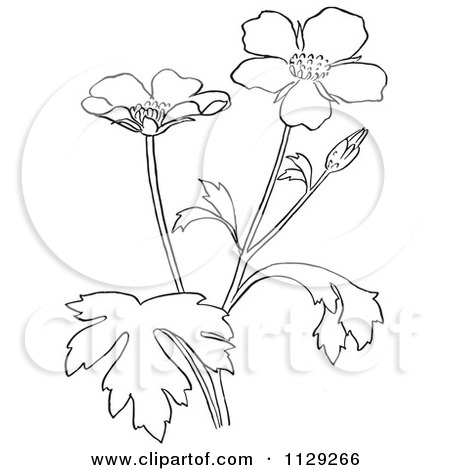 Flowering Plant Drawing Flower Plant Posters