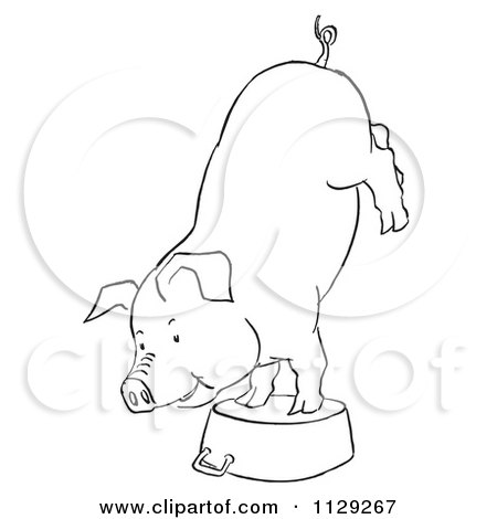 Cartoon Clipart Of An Outlined Pig Doing A Handstand On A Pot - Black And White Vector Coloring Page by Picsburg