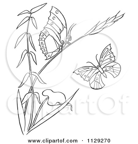 Cartoon Clipart Of An Outlined Plant With Butterflies - Black And White Vector Coloring Page by Picsburg