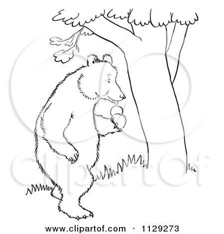Cartoon Clipart Of An Outlined Standing Bear With Apples By A Tree - Black And White Vector Coloring Page by Picsburg