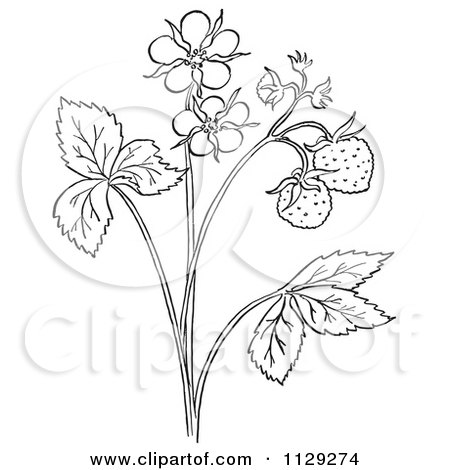 Royalty Free Rf Clipart Illustration Of A Strawberry