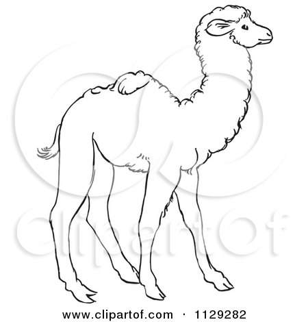 Cartoon Clipart Of An Outlined Cute Baby Camel - Black And White Vector Coloring Page by Picsburg