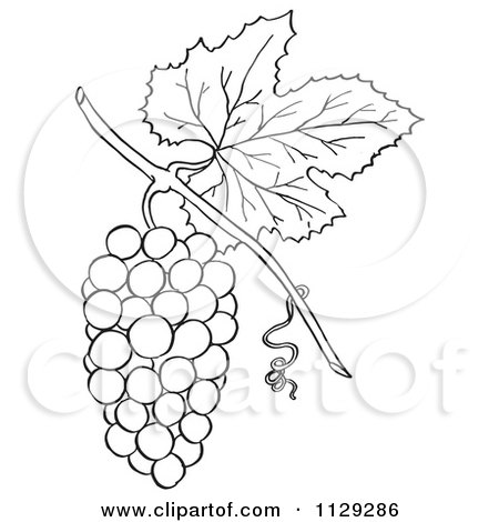 Cartoon Clipart Of An Outlined Bunch Of Grapes With A Leaf Black And White Vector Coloring Page By Picsburg 1129286