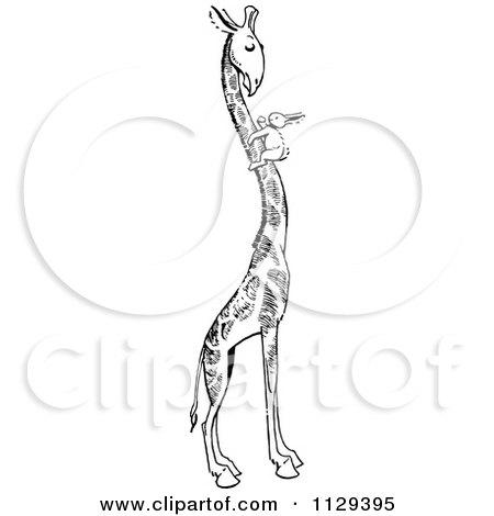 Giraffe With Short Neck Drawing Rabbit on a Giraffes Neck