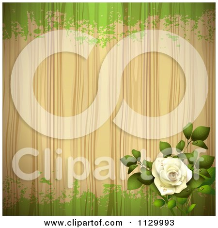 Clipart Of A White Rose Flower Wood And Green Grunge Background - Royalty Free Vector Illustration by merlinul