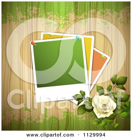 Clipart Of A White Rose Flower And Wood Background With Pinned Photos - Royalty Free Vector Illustration by merlinul