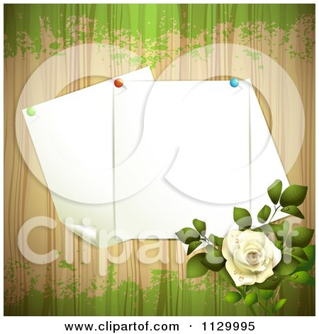Clipart Of A White Rose Flower And Wood Background With Pinned Pages - Royalty Free Vector Illustration by merlinul