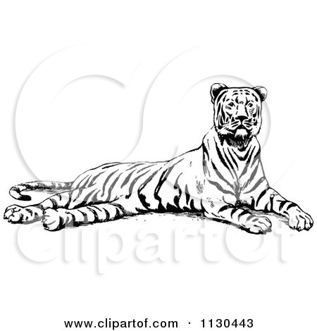 Clipart Of A Retro Vintage Black And White Resting Tiger - Royalty Free Vector Illustration by Prawny Vintage
