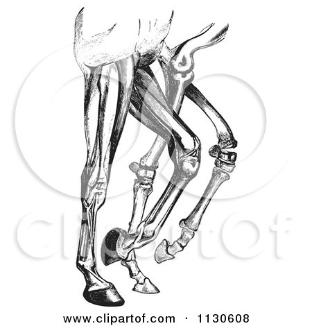 clipart of retro vintage engravings of bones of horse ... grain leg diagram black leg diagram #11