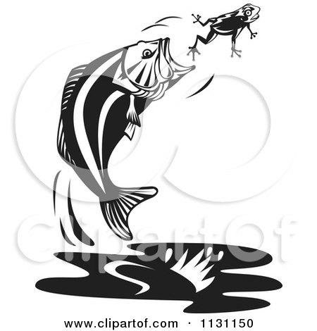 Clipart Of A Retro Black And White Jumping Largemouth Bass Fish Trying To Eat A Frog - Royalty Free Vector Illustration by patrimonio