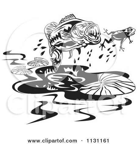 Clipart Of A Retro Black And White Largemouth Bass Fish Chasing A Frog - Royalty Free Vector Illustration by patrimonio
