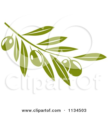 Clipart Of A Green Olive Branch 2 - Royalty Free Vector Illustration by Vector Tradition SM