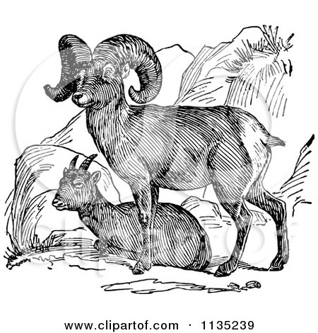 Clipart Of A Retro Black And White Bighorn Sheep Pair - Royalty Free Vector Illustration by Prawny Vintage