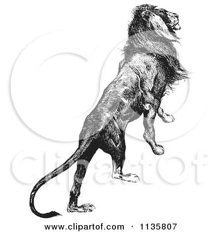 Clipart Of A Retro Vintage Majestic Lion Black And White - Royalty Free Vector Illustration by Picsburg