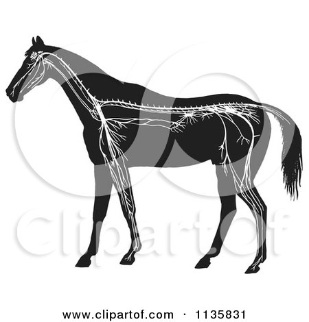Clipart Of A Retro Vintage Horse Anatomy Of The Nervous System In Black And White - Royalty Free Vector Illustration by Picsburg