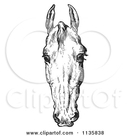 Clipart Of A Retro Vintage Engraved Horse Anatomy Of A Bad Head In Black And White 2 - Royalty Free Vector Illustration by Picsburg
