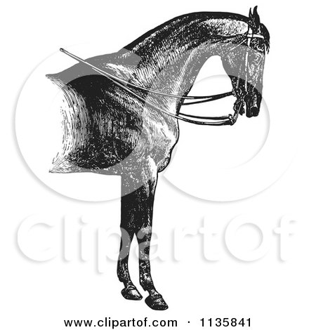 Clipart Of A Retro Vintage Engraved Horse Anatomy Of A Reined Horse With Good Shoulders In Black And White - Royalty Free Vector Illustration by Picsburg