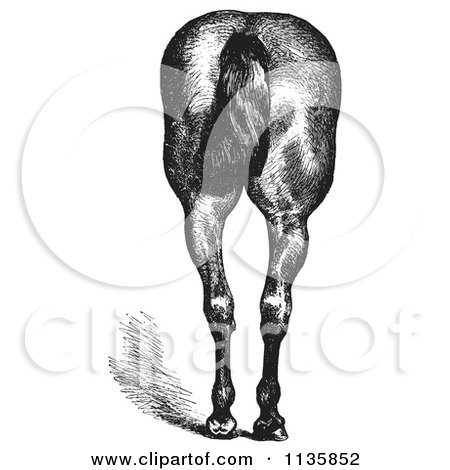 Clipart Of A Retro Vintage Engraved Horse Anatomy Of Good Hind Quarters In Black And White 2 - Royalty Free Vector Illustration by Picsburg