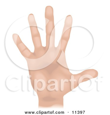 Human Hand and Fingers Clipart Illustration by AtStockIllustration