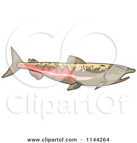 Clipart of a Chinook Salmon Fish - Royalty Free Vector Illustration by patrimonio