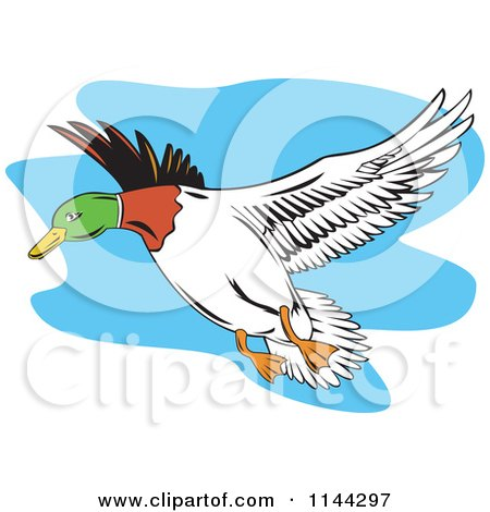Clipart of a Retro Flying Mallard Duck - Royalty Free Vector Illustration by patrimonio
