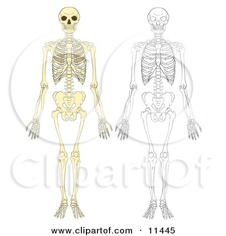 Human Skeletons Clipart Illustration by AtStockIllustration