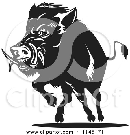 Clipart of a Retro Black and White Charging Wild Boar Pig - Royalty Free Vector Illustration by patrimonio