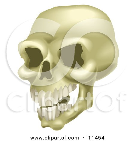 Human Skull With Teeth Clipart Illustration by AtStockIllustration