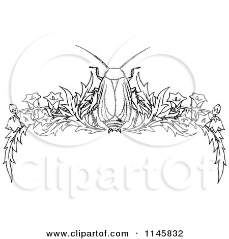 Clipart of a Retro Vintage Black and White Beetle and Floral Page Border 1 - Royalty Free Vector Illustration by Prawny Vintage