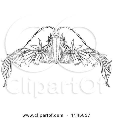 1145837-Clipart-Of-A-Retro-Vintage-Black-And-White-Beetle-Border ...