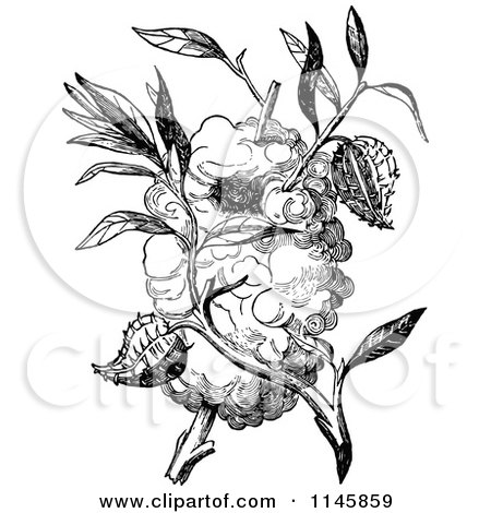 Clipart of a Retro Vintage Black and White Capocier Bird Nest - Royalty Free Vector Illustration by Prawny Vintage