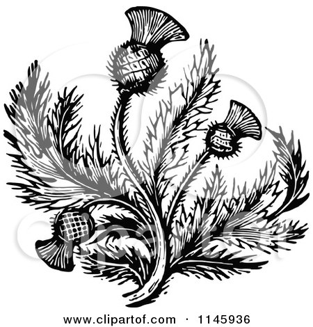 Clipart of Retro Vintage Black and White Thistle Flower 2 - Royalty Free Vector Illustration by Prawny Vintage
