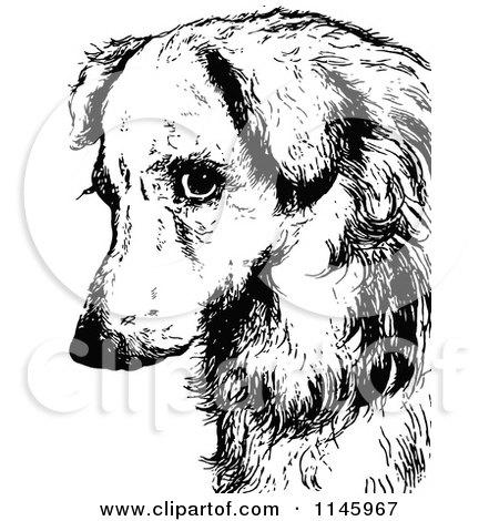 Sad Dogs Black And White Black And White Sad Dog
