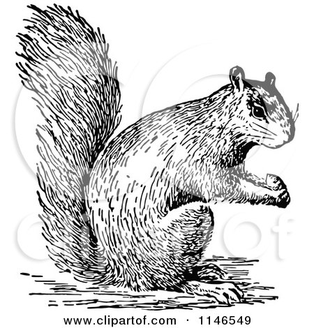 Squirrel images clipart black and white - photo#26