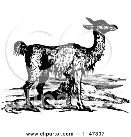Clipart of a Retro Vintage Black and White Llama - Royalty Free Vector Illustration by Prawny Vintage
