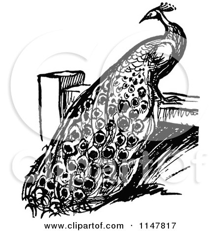 Clipart of a Retro Vintage Black and White Peacock on a Fence - Royalty Free Vector Illustration by Prawny Vintage