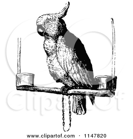 Clipart of a Retro Vintage Black and White Cockatoo Parrot - Royalty Free Vector Illustration by Prawny Vintage