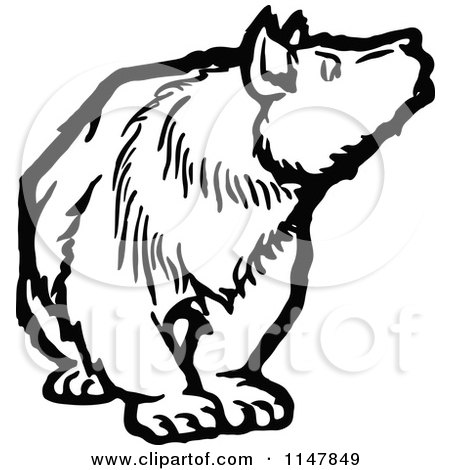 Clipart of a Black and White Bear Looking to the Side - Royalty Free Vector Illustration by Prawny Vintage