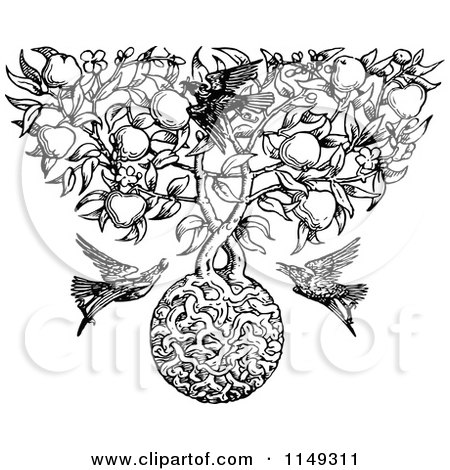 Clipart of a Retro Vintage Black and White Apple Tree with Roots and Birds - Royalty Free Vector Illustration by Prawny Vintage
