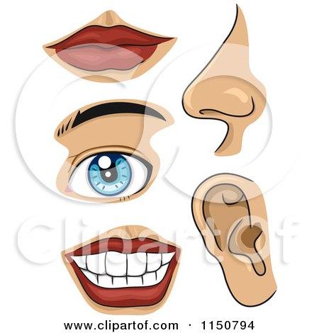Cartoon of Facial Body Parts - Royalty Free Vector Clipart by BNP Design Studio